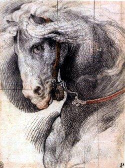 Carboncino e matita for Cavallo disegno a matita